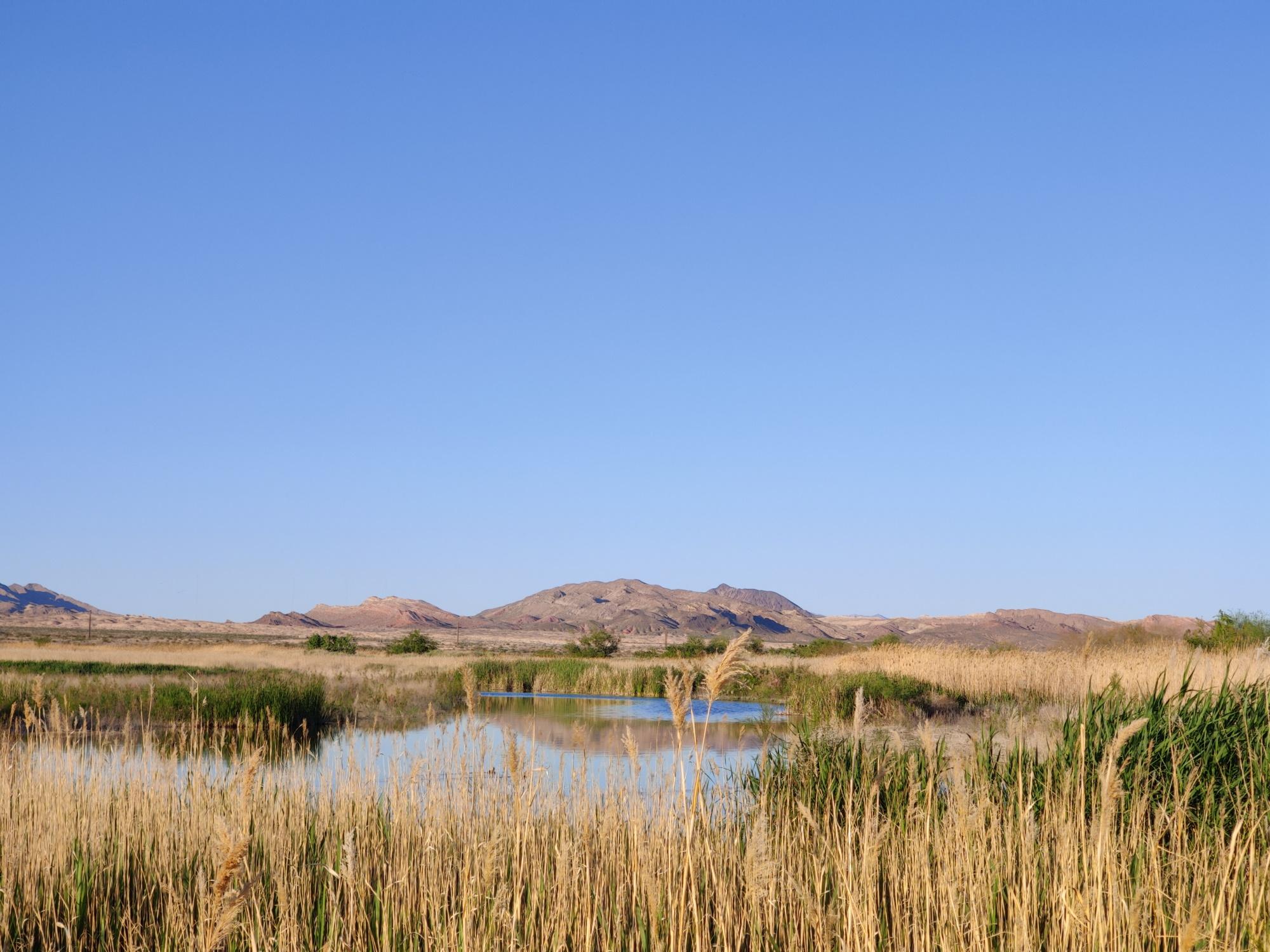 Clark County Wetlands Park Henderson Marsh